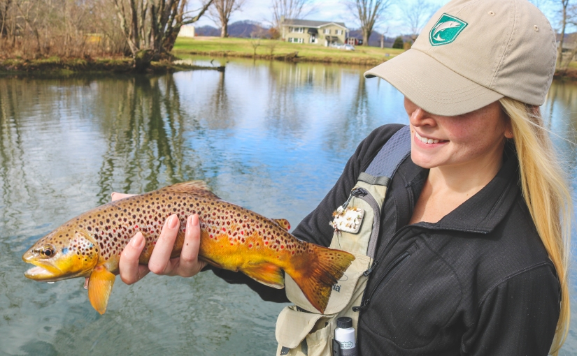 South Holston Spawning Regulations
